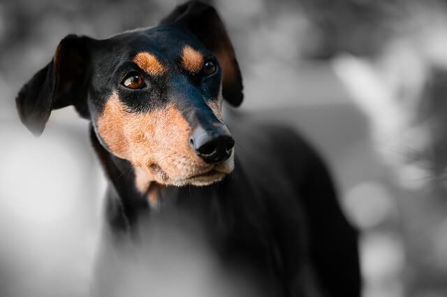 Dog Bite Lawyer In Wa